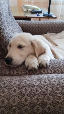 А это мой любимый диванчик, а хозяин со мной спит!