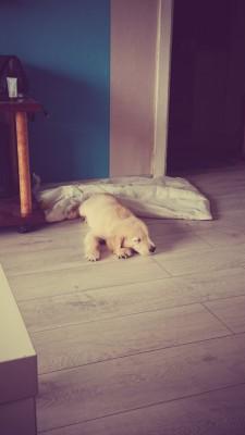 Вот так я сплю