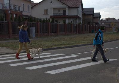 и правильно переходить дорогу