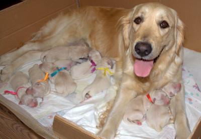 первые сутки от рождения