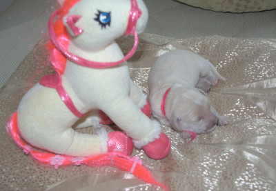 Розовая ленточка 5 дней