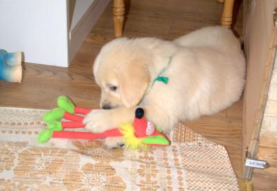 Iочень любит мягкие игрушки