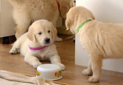 Возьми тарелочку, я все равно уже съел!