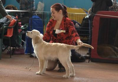 Модженс Кей Вланти Делимар (Belarus) - большая перспектива, лучший беби кобель, лучший беби породы