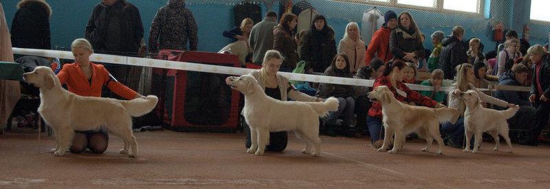 Международная выставка собак всех пород 27-28 февраля 2016