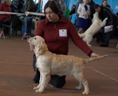 Моэма Крокус Вланти Делимар (Belarus) - большая перспектива, лучший беби сука, лучший беби породы