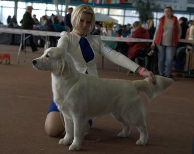 Валлермоссо Альда (Russia)– большая перспектива, лучшая сука щенок, лучший щенок породы
