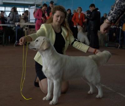 ANGELONATO HEAVEN SENT (Belarus) - оценка отлично, JCAC , лучшая сука юниор.