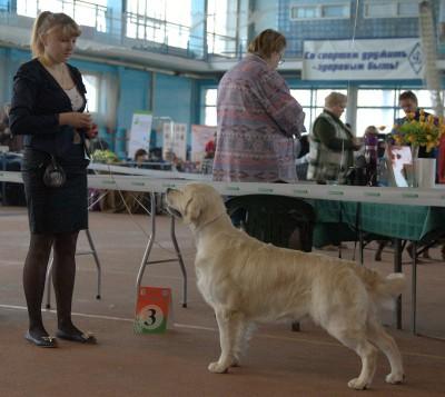 DIAMANT BLANKIZ DOLINY SOLNCA (Russia) – оценка отлично, 1 место, CAC, CACIB, ВОВ
