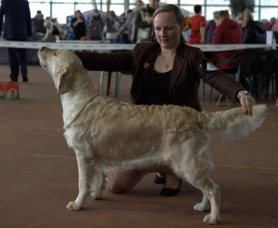 SOLSTRIMMANS CHIENNE (Finland)– оценка отлично, 1 место,CAC