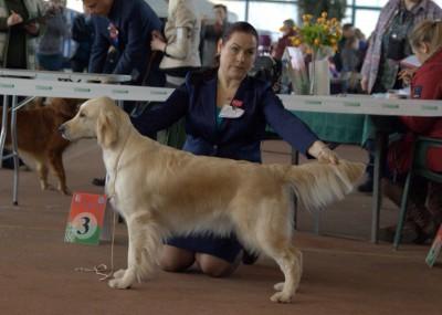 ZOLOTOY OHOTNIK VANESSA PRINSESSA (Belarus) – оценка отлично, 1 место,CAC, R.CACIB
