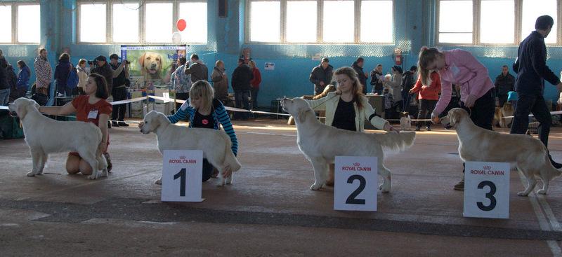выставки собак в Минске 13.04.2016