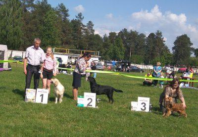 OLOTOY OXOTNIK VANILLA SKAY - 1 место за звание лучший представитель 8 группы FCI.
