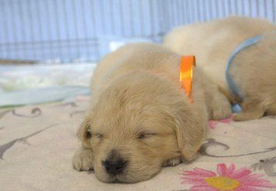 сладко спиться