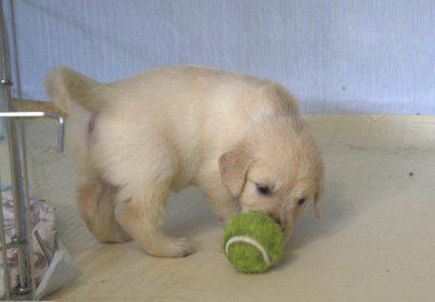мой первый мячик