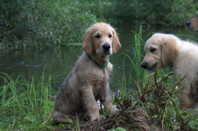 Ну вот выпачкался! Но зато я узнал что такое болото.
